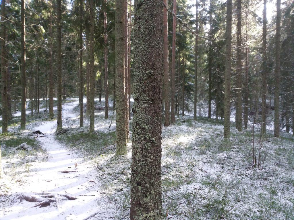 Metsässä kävely on hyvää stressinhallintaa korona-aikana